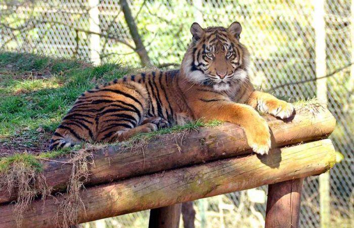 Paignton_Zoo
